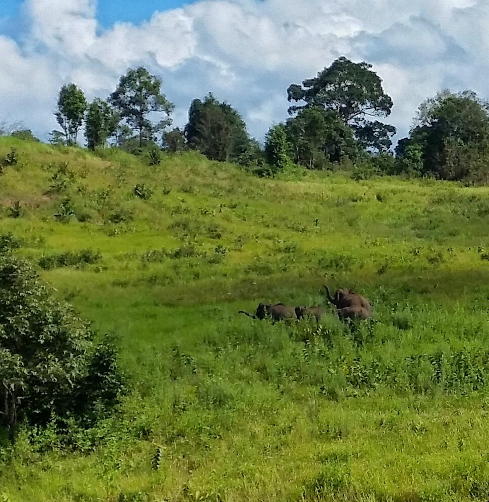 Słonie ❤️