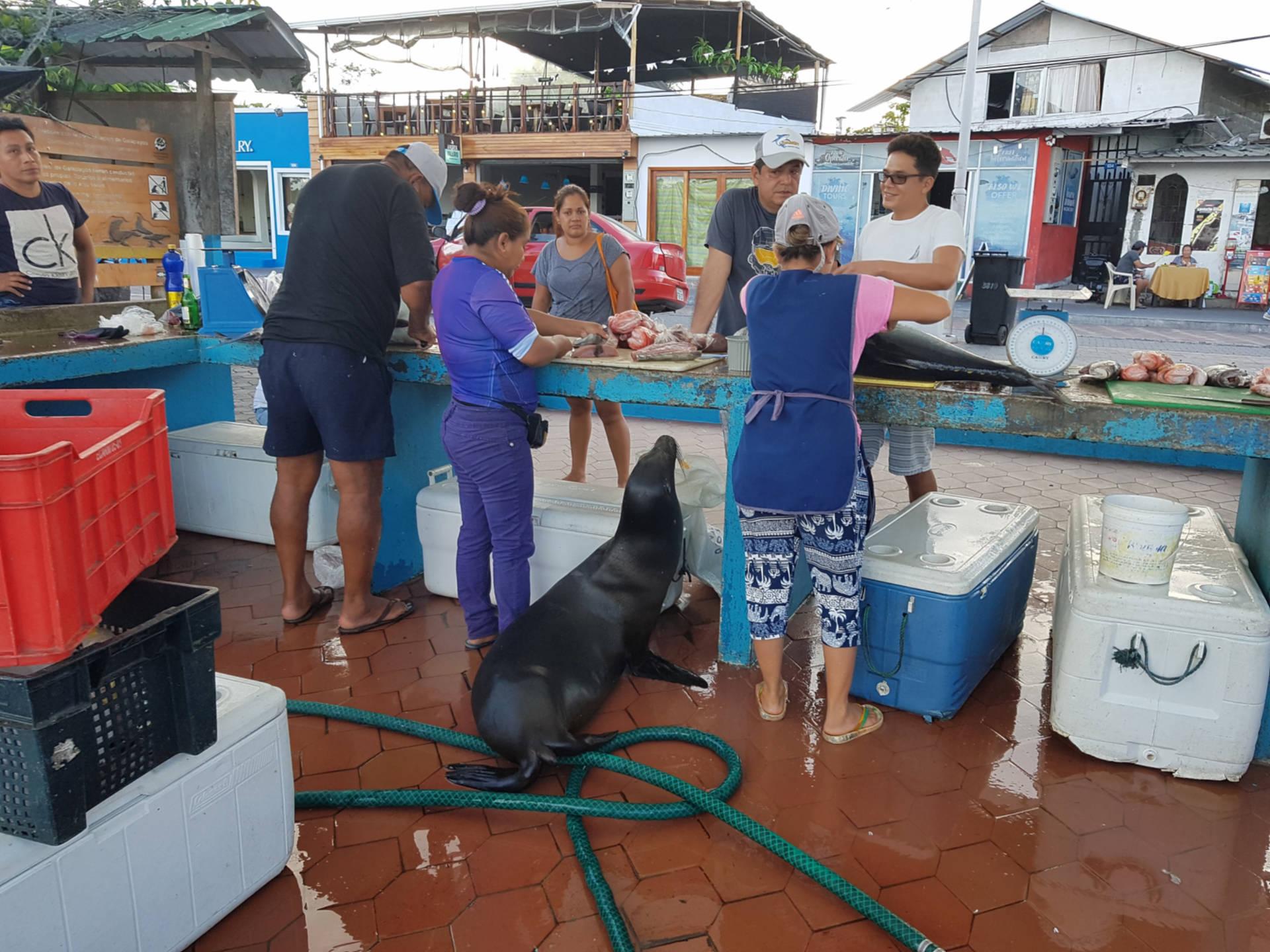 Jak tanio zwiedzić Wyspy Galapagos Darmowe atrakcje nawyspach (1)