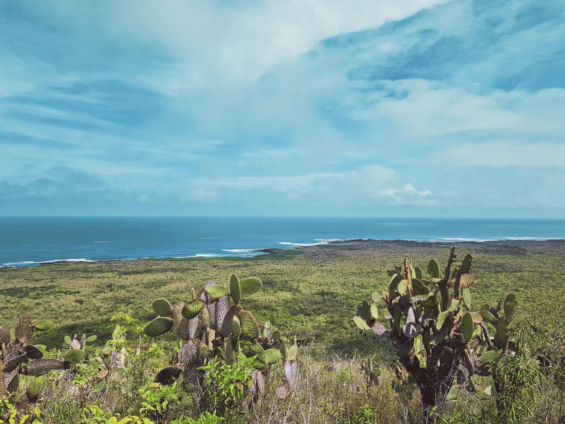 Jak tanio zwiedzić Wyspy Galapagos Darmowe atrakcje nawyspach (10)