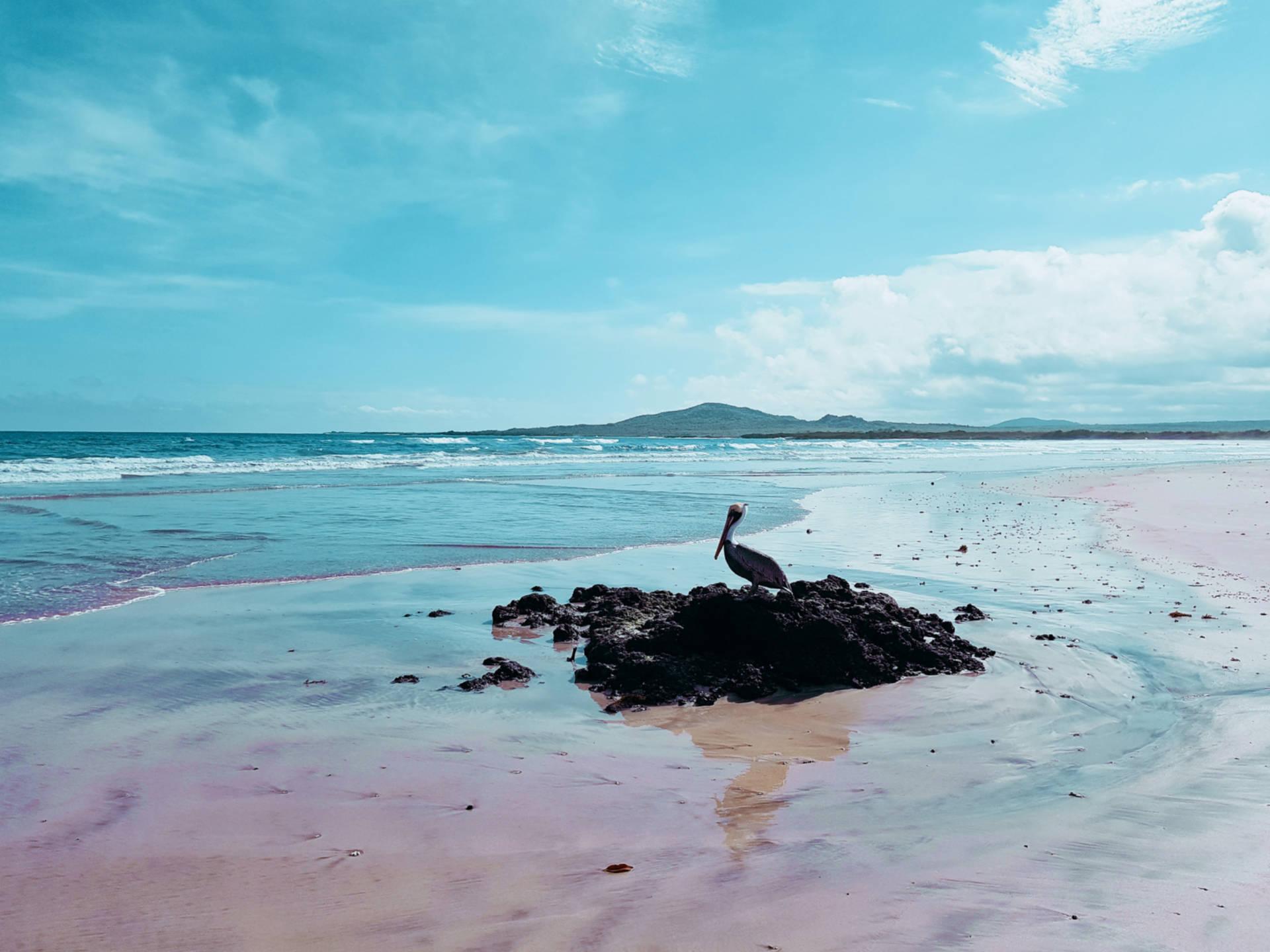 Jak tanio zwiedzić Wyspy Galapagos Darmowe atrakcje nawyspach (11)