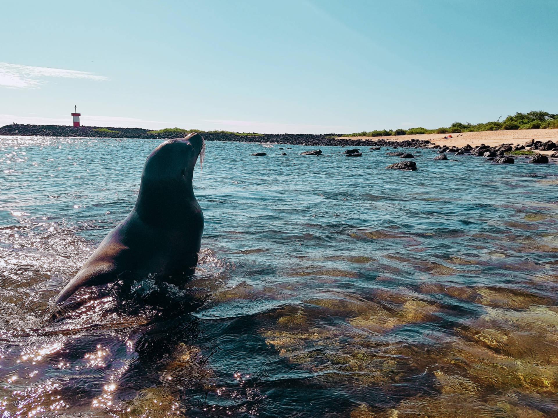 Jak tanio zwiedzić Wyspy Galapagos Darmowe atrakcje nawyspach (14)