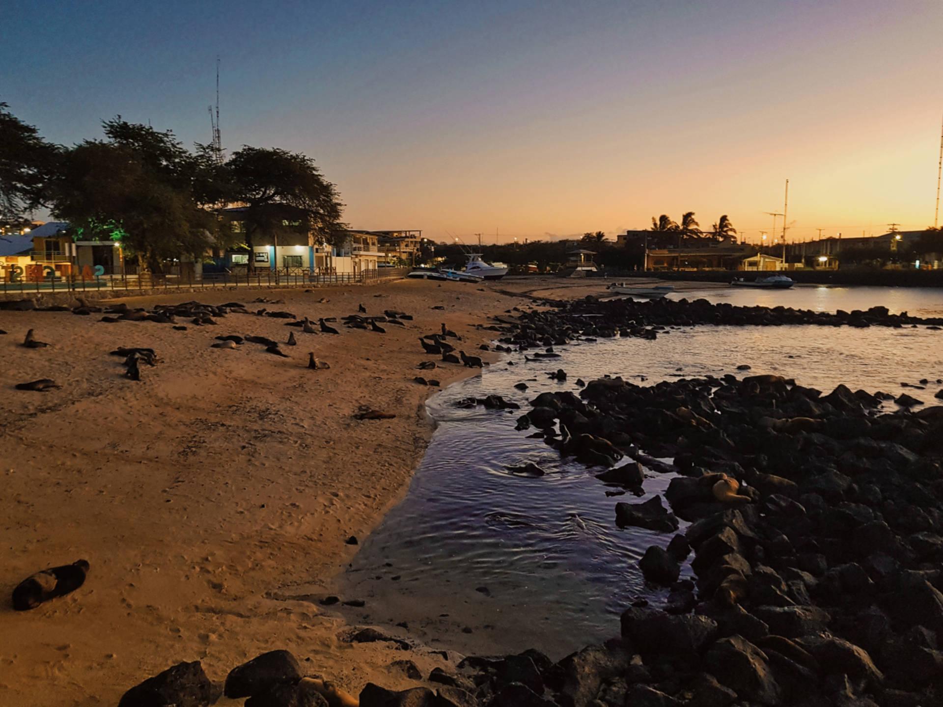 Jak tanio zwiedzić Wyspy Galapagos Darmowe atrakcje nawyspach (15)