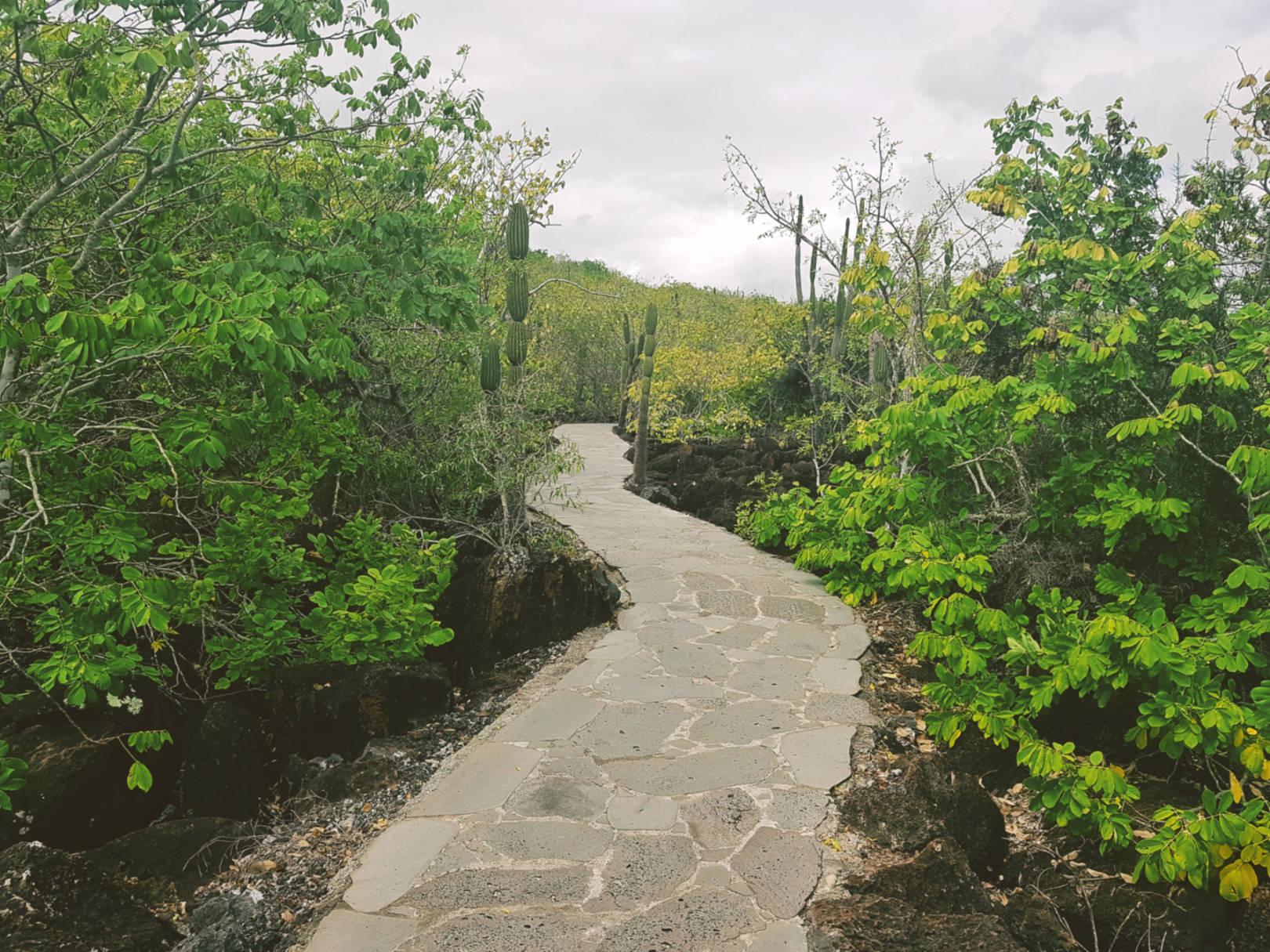 Jak tanio zwiedzić Wyspy Galapagos Darmowe atrakcje nawyspach (18)