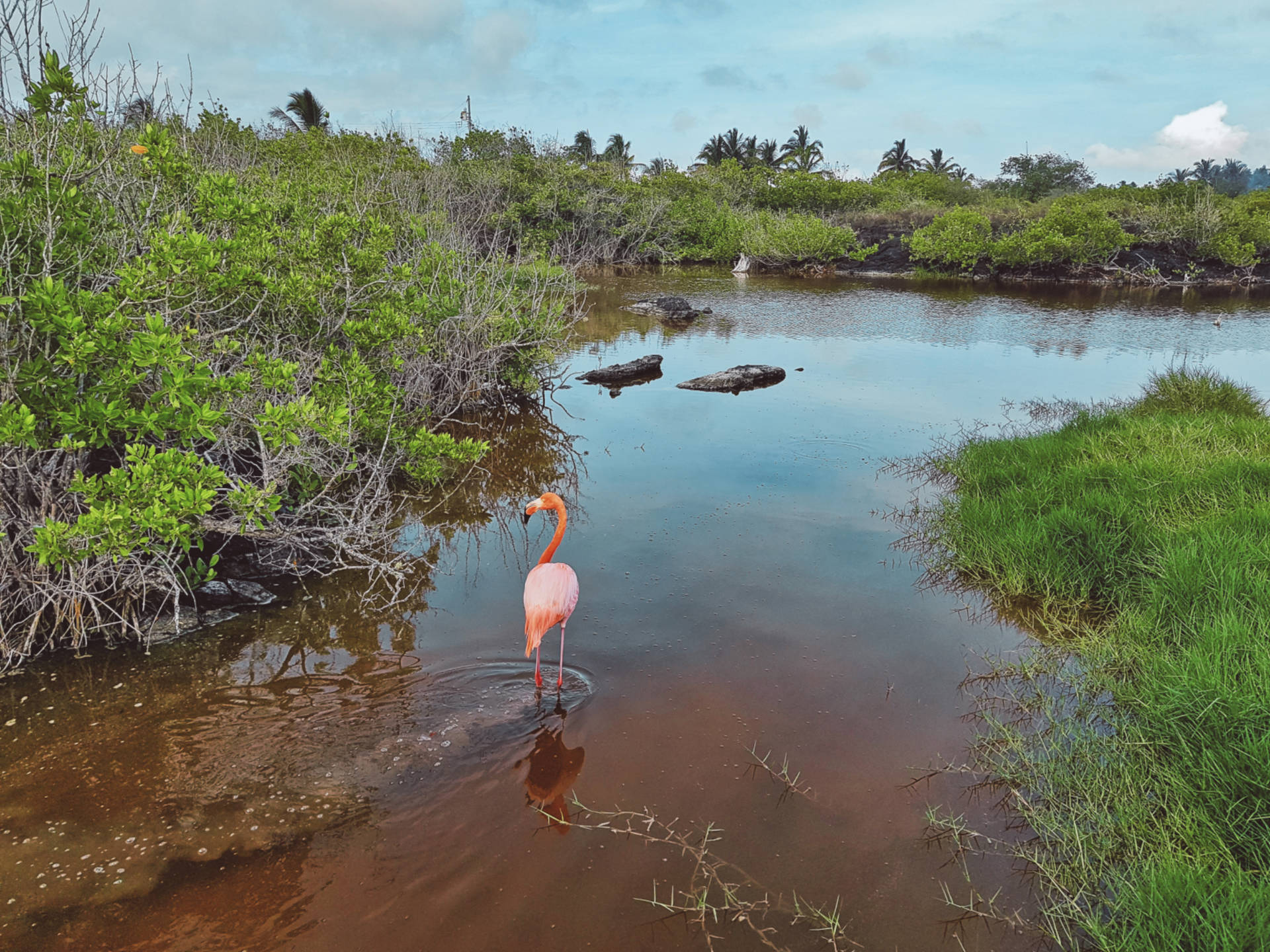 Jak tanio zwiedzić Wyspy Galapagos Darmowe atrakcje nawyspach (19)