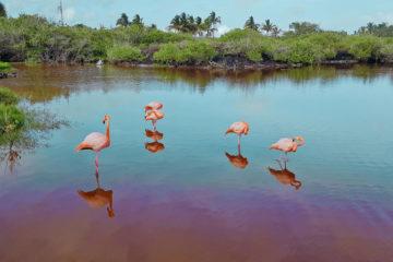 Jak tanio zwiedzić Wyspy Galapagos Darmowe atrakcje na wyspach (24)