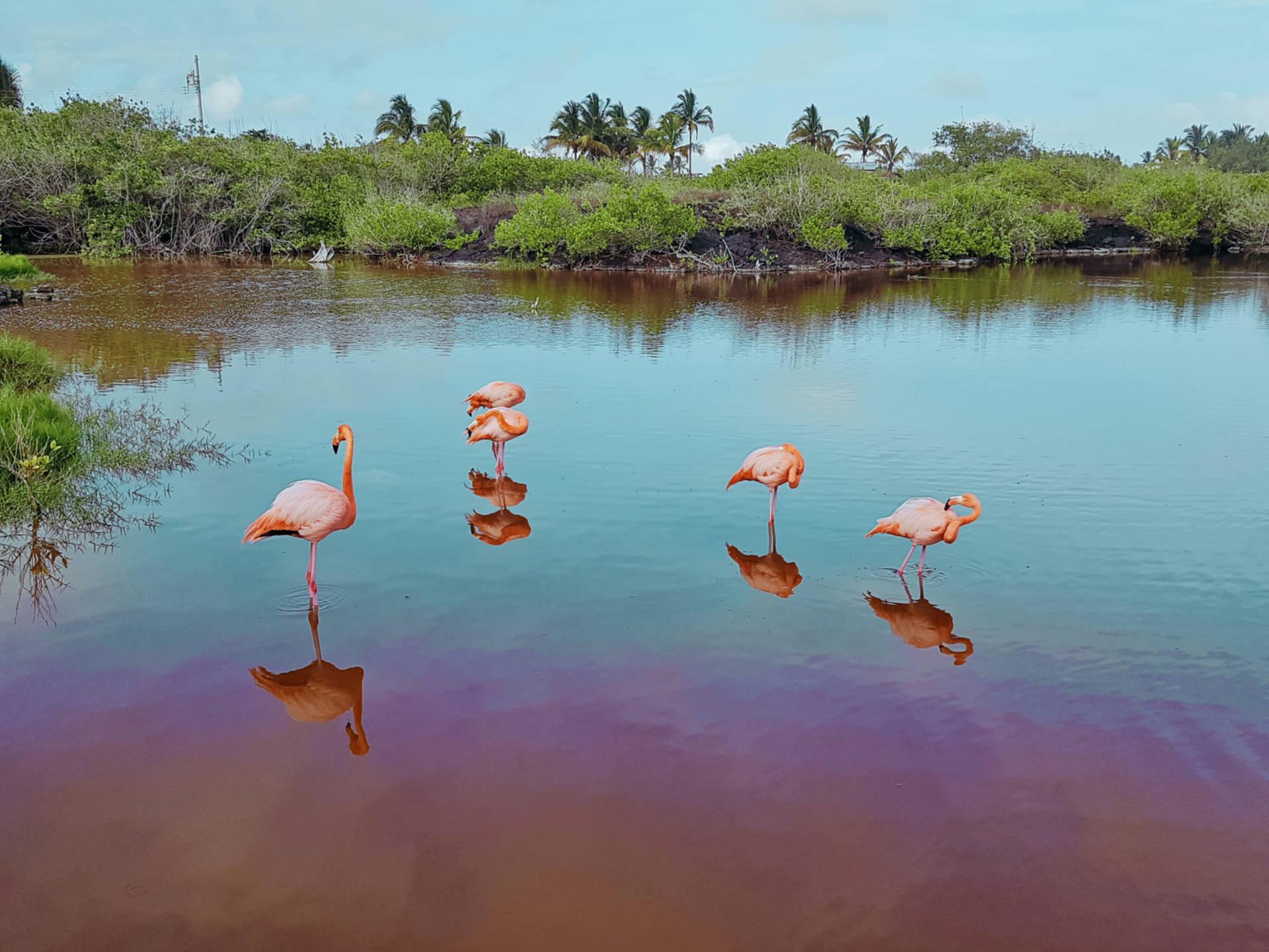 Jak tanio zwiedzić Wyspy Galapagos Darmowe atrakcje nawyspach (24)