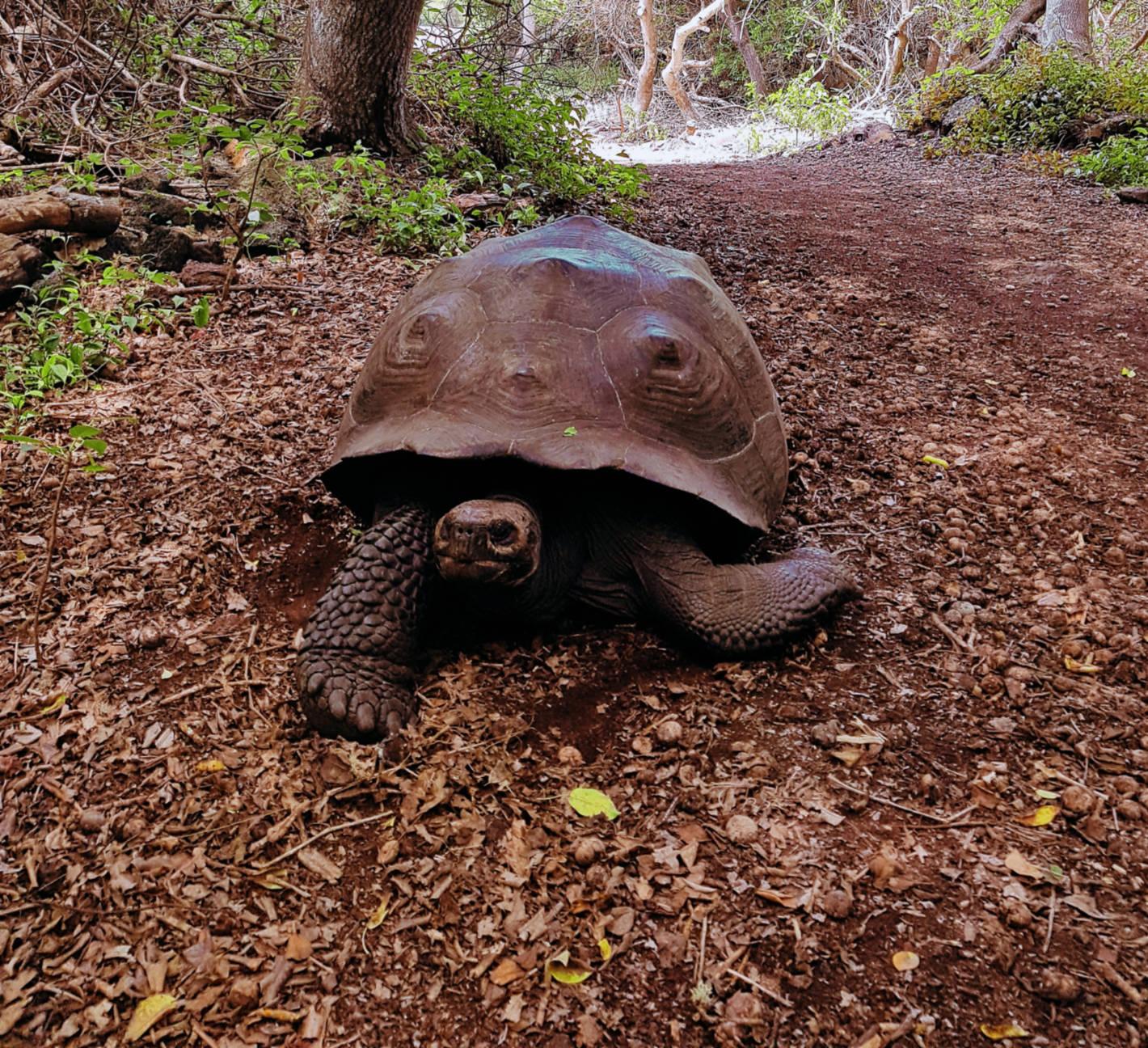 Jak tanio zwiedzić Wyspy Galapagos Darmowe atrakcje nawyspach (8)