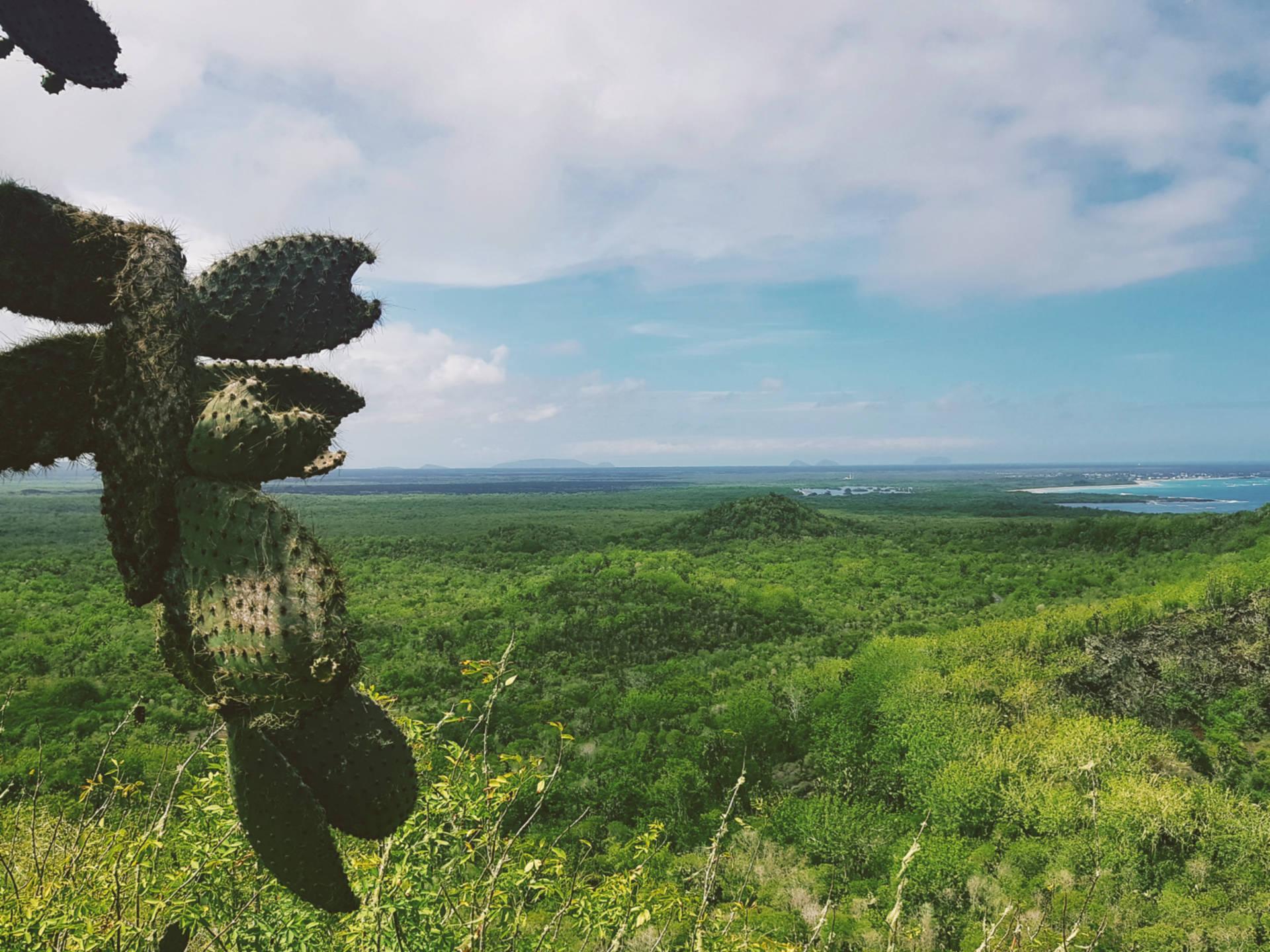 Jak tanio zwiedzić Wyspy Galapagos Darmowe atrakcje nawyspach (9)