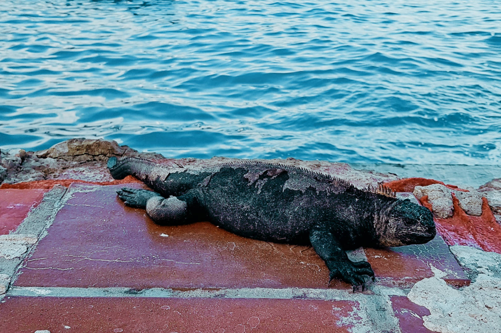 Zaczarowane Wyspy Galapagos (1)