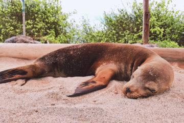 Zaczarowane Wyspy Galapagos (33)