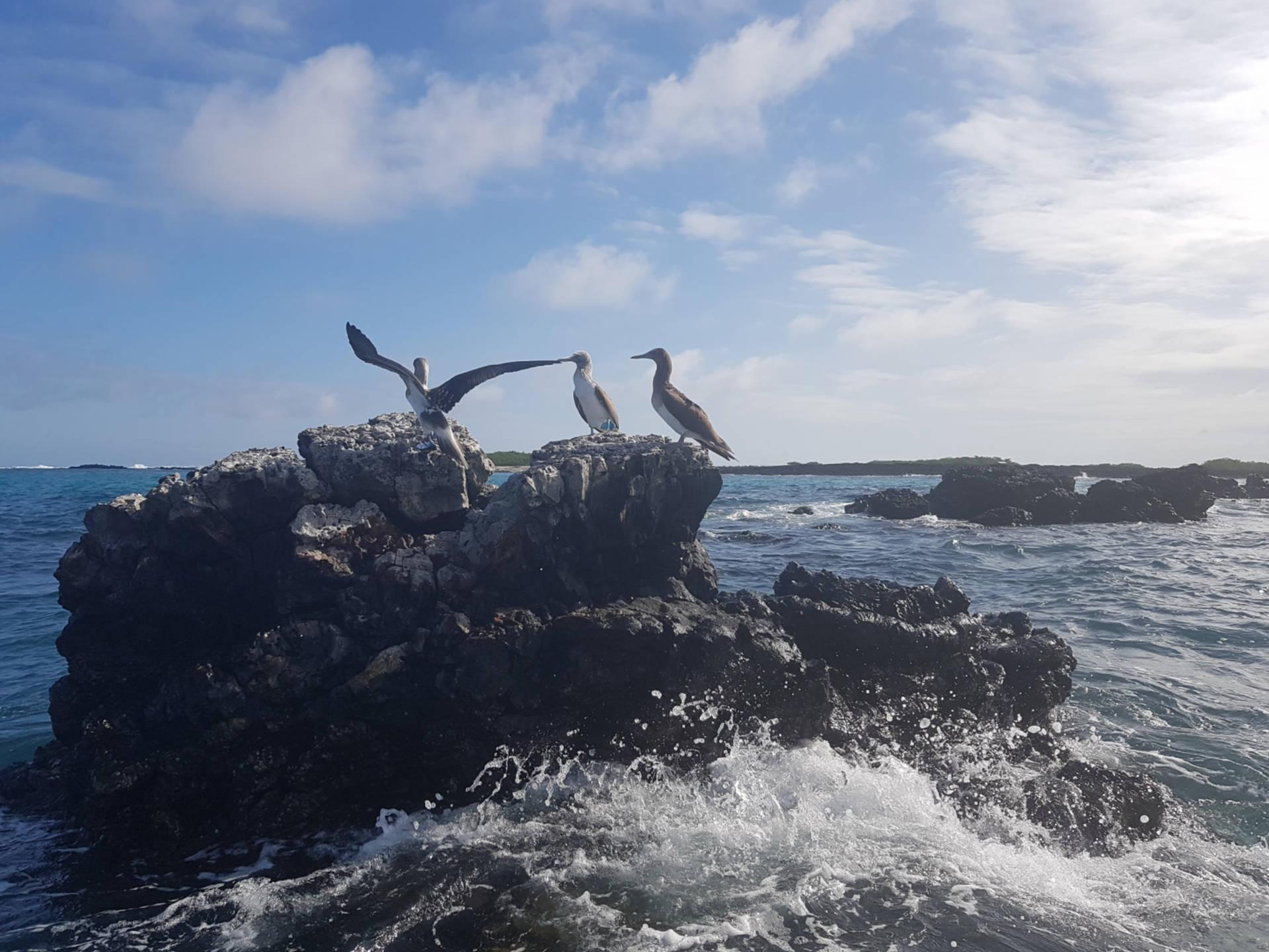 Zaczarowane Wyspy Galapagos (5)