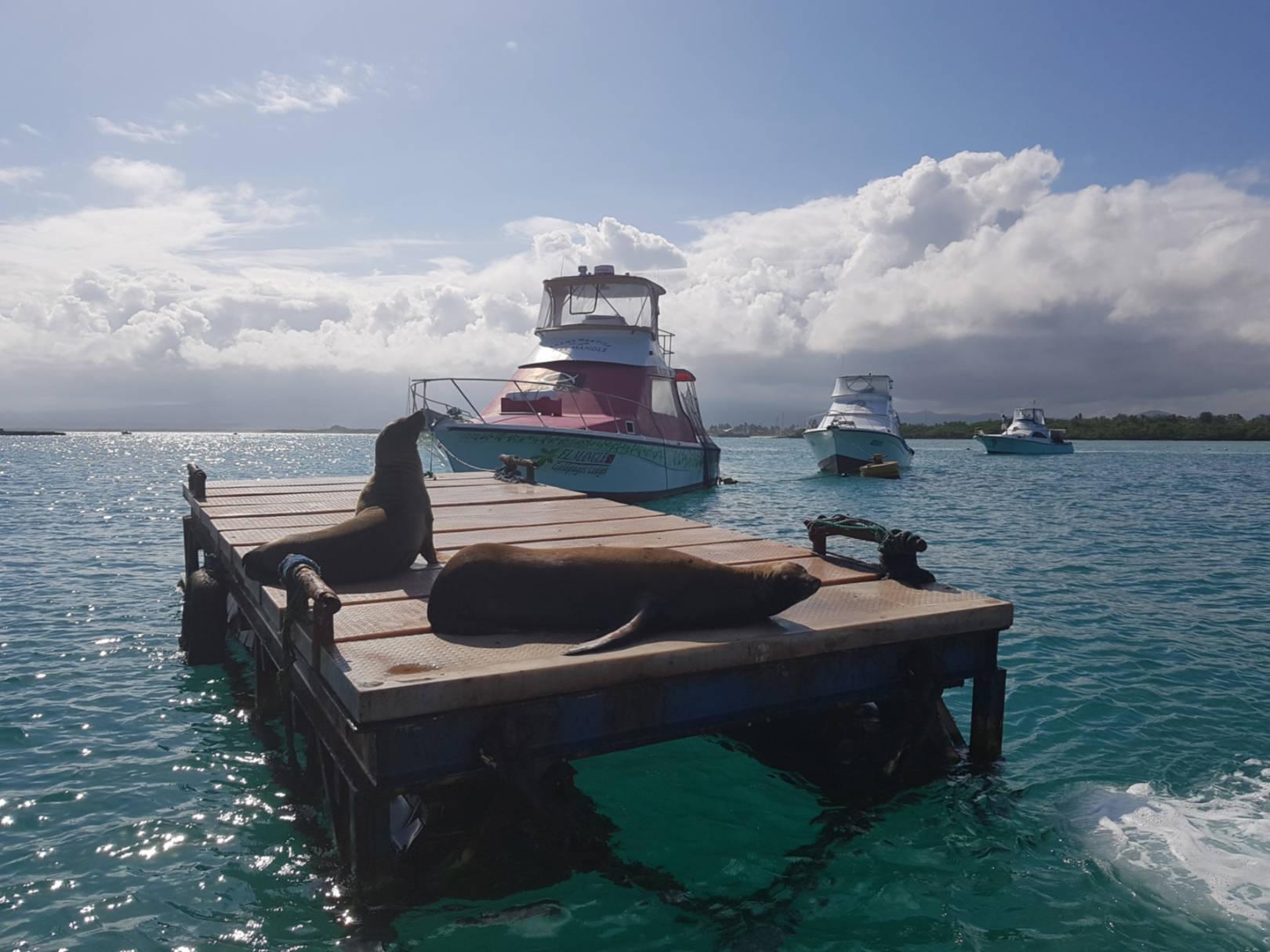 Zaczarowane Wyspy Galapagos (9)