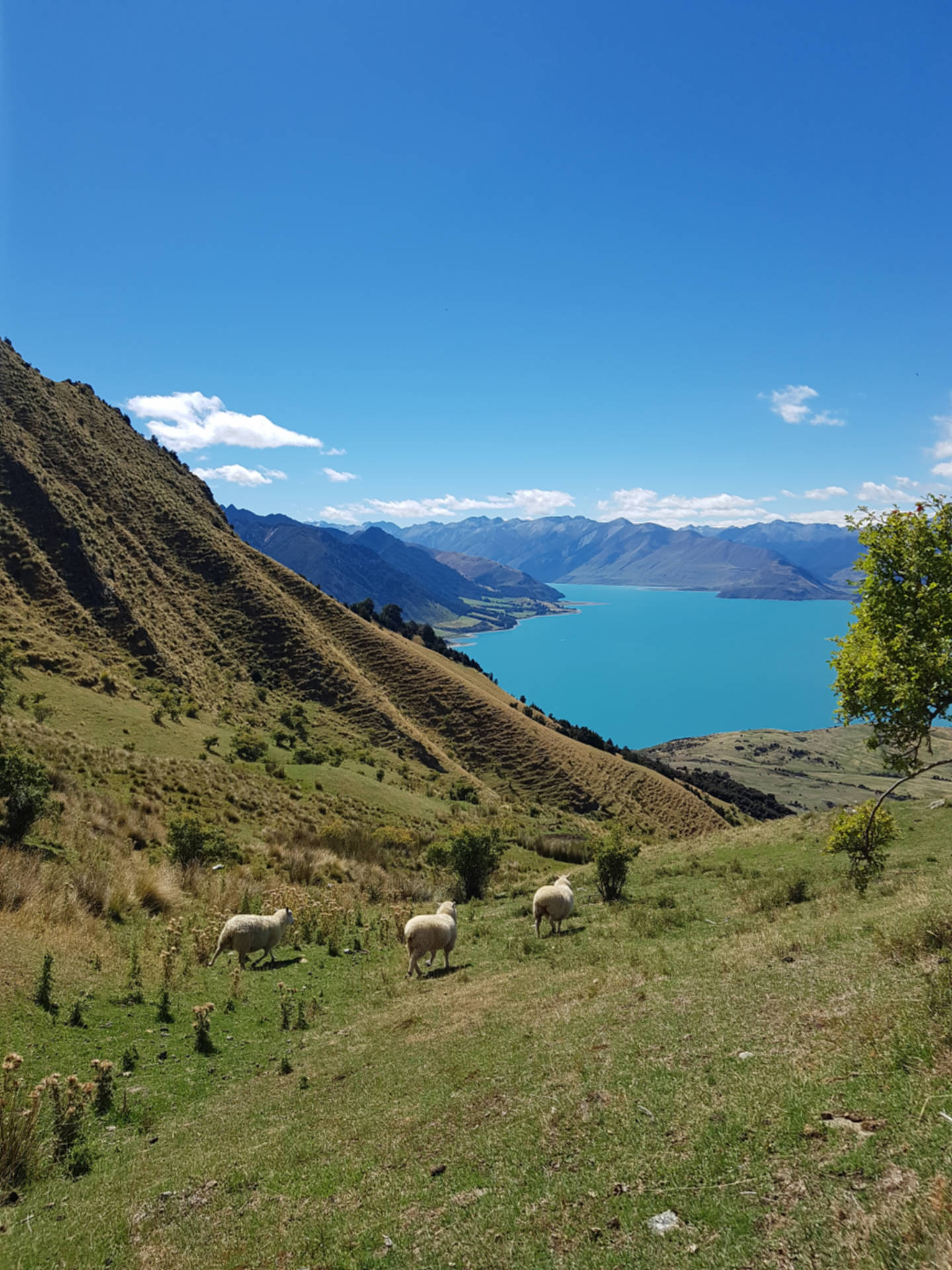 Top 10 najpiękniejszych miejsc wNowej Zelandii (21)